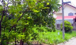 Lot for Sale in Forbes Park, Makati City